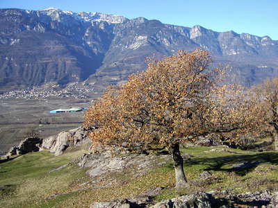 Etschtal / Valle dell'Adige with Tramin / Termeno