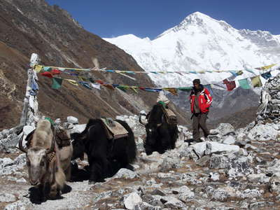 Gokyo  |  Yaks with Cho Oyu