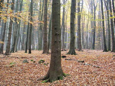 Muehlviertel  |  Autumn forest