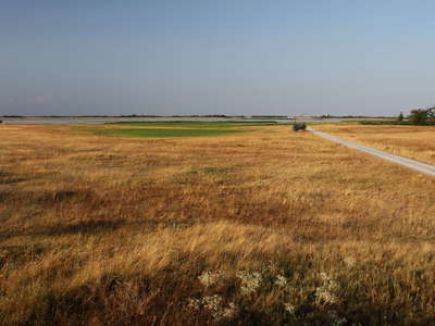 Lange Lacke  |  Steppe area