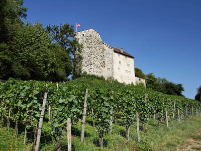 Habsburg with vineyard