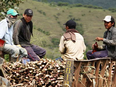Cauca Valley  |  Sugar cane planters