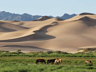 Khongoryn Els  |  Dune field with horses