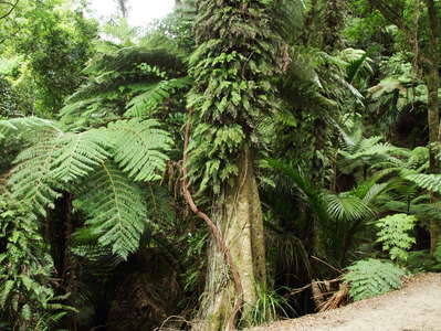 Abel Tasman NP  |  Subtropical rainforest