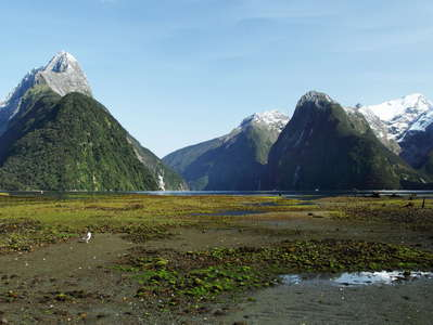 Milford Sound / Piopiotahi at low tide