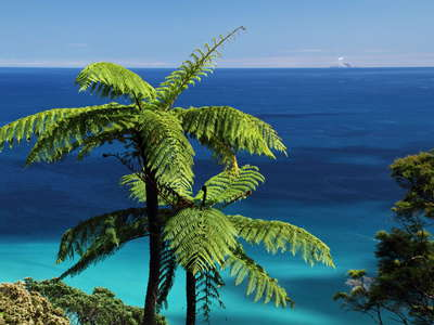 Tree ferns and Bay of Plenty