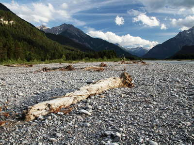 Lechtal Valley  |  Floodplain with deadwood