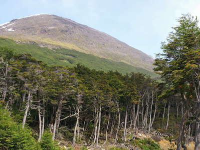 Ushuaia  |  Forest with Magellan's beech