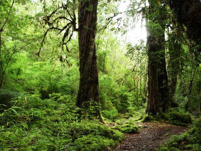 PN Alerce Andino  |  Valdivian temperate rainforest
