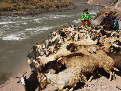 Bartang Valley  |  Livestock