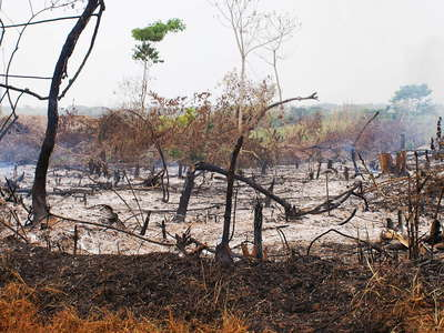 Western Uganda  |  Slash and burn
