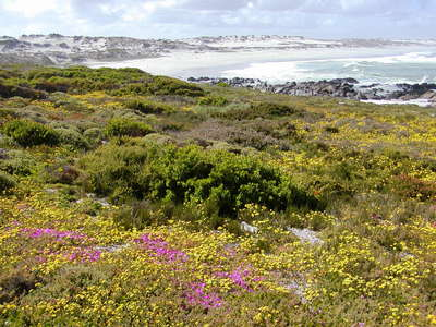 West Coast NP  |  Coastal vegetation