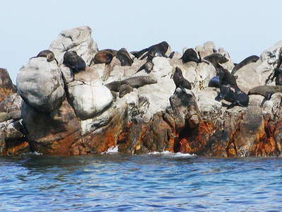 Walker Bay  |  Seal colony