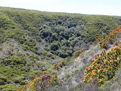 Grootbos NR  |  Forest Valley