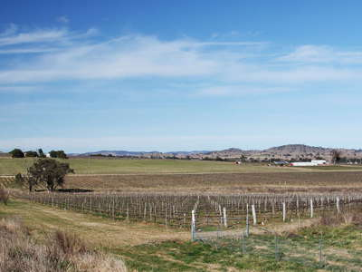 Gulgong  |  Grape cultivation