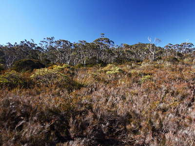 New England NP  |  Heathland and Eucalyptus forest