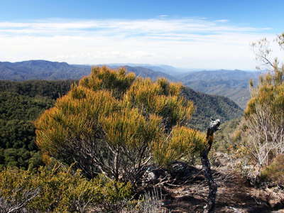 New England NP  |  Heathland with Allocasuarina rigida