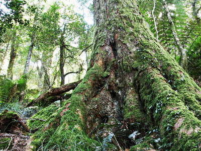 New England NP  |  Temperate rainforest
