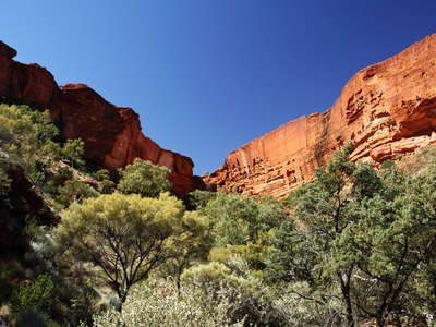 Watarrka NP  |  Kings Canyon with riverine forest
