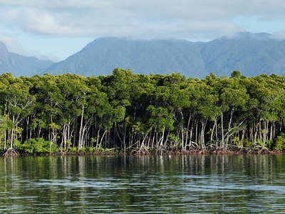 Port Douglas  |  Mangroves