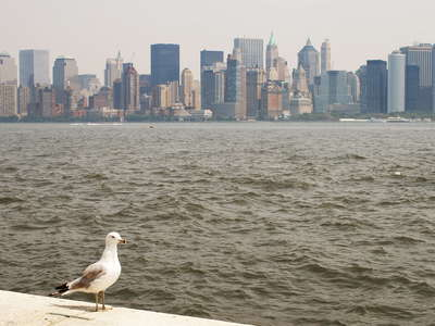Gull and Lower Manhattan