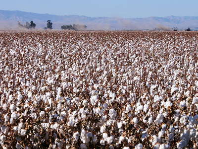 San Joaquin Valley  |  Cotton cultivation