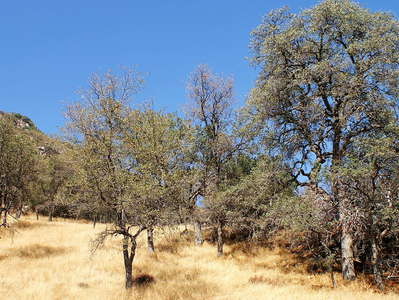 Kaweah River Valley  |  Oak woodland