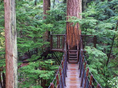 North Vancouver  |  Treetop Adventure