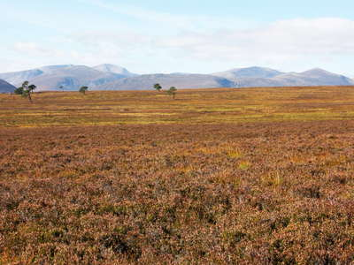 Cairngorms with heathland