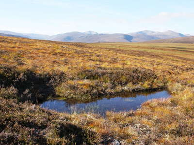 Cairngorms  |  Wetland with pond