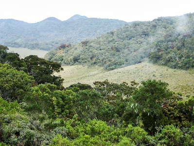 Horton Plains NP  |  Cloud forest and patana