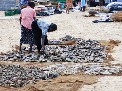 Negombo  |  Fish market
