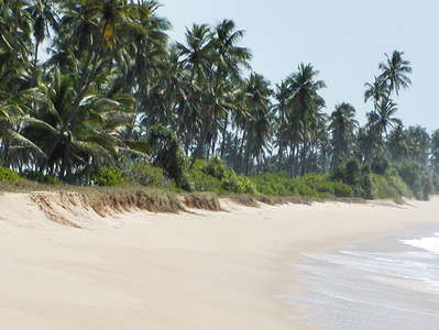 Tangalle  |  Tropical beach
