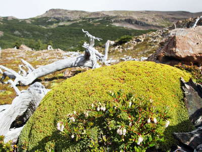 PN Torres del Paine  |  Cushion plant