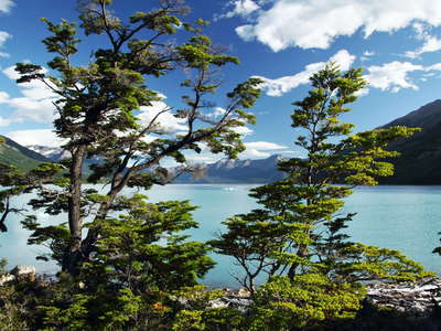 PN Los Glaciares  |  Lago Argentino with southern beech trees