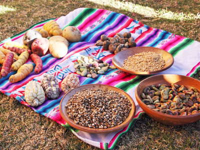 Isla Amantaní  |  Selection of crops