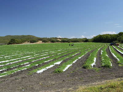 Les Salines | Vegetable cultivation