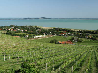 Badacsony | Vineyard and Balaton