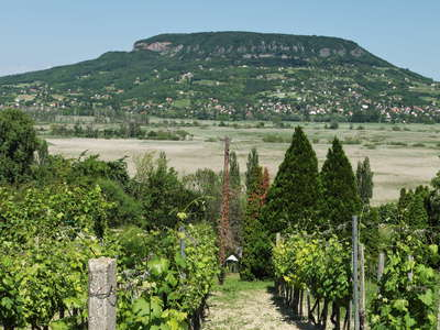 Szigliget | Vineyard with Badacsony