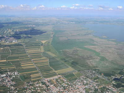 Neusiedler See with reed belt
